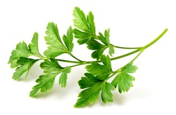 fresh flat-leaf parsley herb isolated on white background