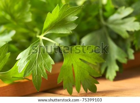 Fresh flat-leaved parsley (Selective Focus, Focus on the left leaf)