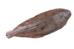 Fresh flatfish, sole on white background