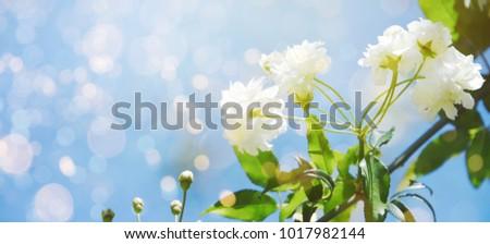 fresh flowers. spring...