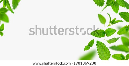 Fresh flying green mint leaves, lemon balm, melissa, peppermint isolated on light gray background flat lay. Mint leaf texture, pattern. Spearmint herbs. Tea ingredient. Ecology organic natural layout Foto stock ©