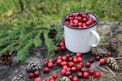 Fresh forest cranberries in a mug on a stump in the woods. Cranberries and cones on a wooden background. Christmas tree and drinks of sweet ripe cranberries. Christmas traditions and drinks