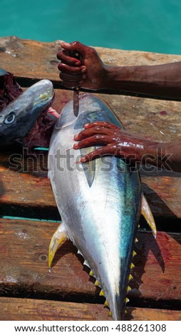 fresh from the ocean yellow fins tuna #488261308
