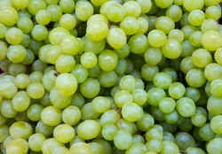 Fresh Fruit Brunch Green Grapes on Shelf in Fresh Fruit market. Bunch of green fresh ripe juicy grapes as background, closeup.