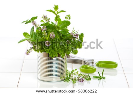 Fresh garden herbs in recycled tin can with herb scissors on tiled kitchen surface