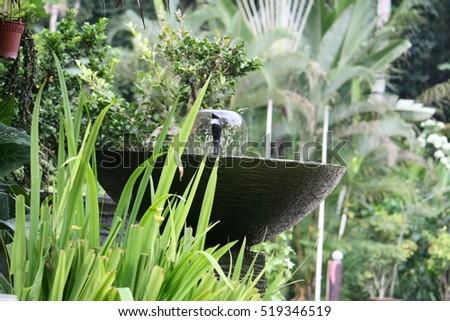 fresh garden view
