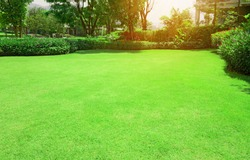 Fresh gardening green Bermuda grass smooth lawn with curve form of bush, trees on the background in the house's garden  under morning sunlight