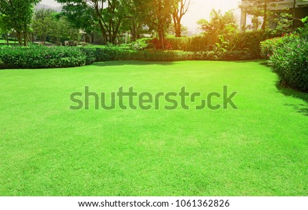 Fresh gardening green Bermuda grass smooth lawn with curve form of bush, trees on the background in the house's garden  under morning sunlight #1061362826