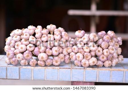 fresh garlic bunches from garden