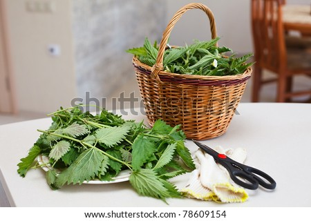 Fresh gathered nettles in a wicker basket on the table in the kitchen