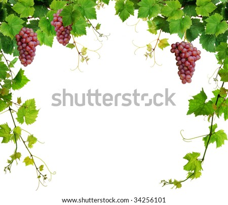 Fresh grapevine border, isolated on white background