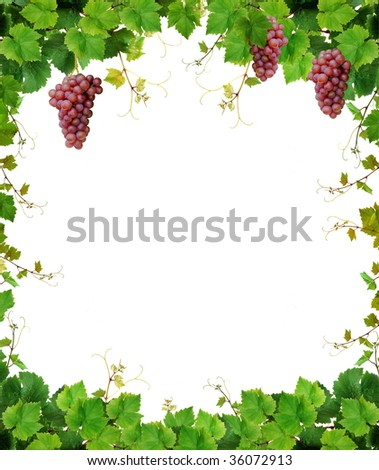 Fresh grapevine frame, isolated on white background