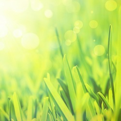 Fresh grass abstract background, bright field with sunlight, beautiful nature at spring, soft focus, ecology and energy concept