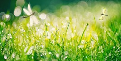 Fresh grass and sparkling drops of morning dew in warm sunlight, with shallow focus and flying dragonflies in nature outdoors.