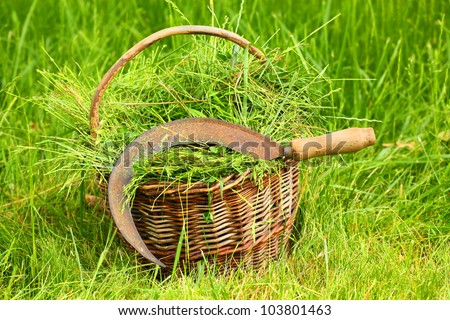 Fresh grass in basket and sickle. Scene from rural garden in summer. - stock photo