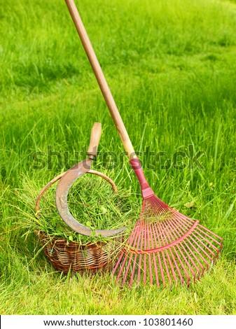 Fresh grass in basket with sickle and rake. Scene from rural garden in summer.