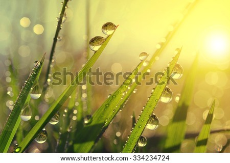 stock photo fresh grass with dew drops at sunrise nature background 334234724 - Каталог — Фотообои «Природа, пейзаж»