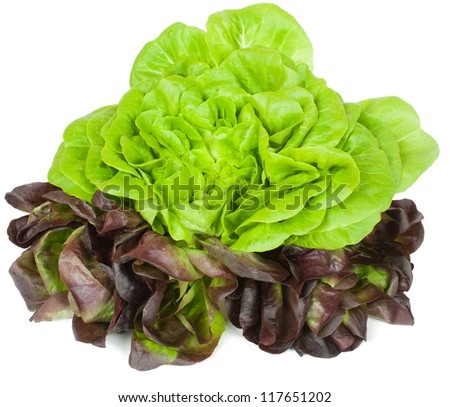 Fresh   green and red lettuce  isolated on white
