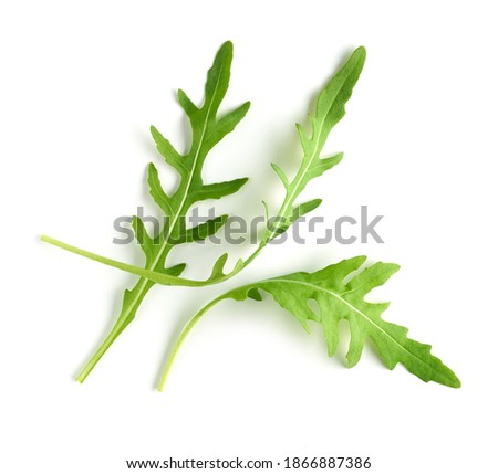 fresh green arugula leaves isolated on white background, top view ストックフォト ©