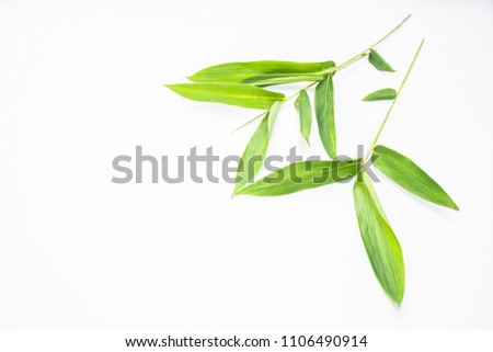 Fresh green bamboo leaves with tiny branch and fine or tapering leaves on isolated white background. Bamboo is evergreen plants and fastest growing in tropical country in asia ,decorate plant concept. #1106490914