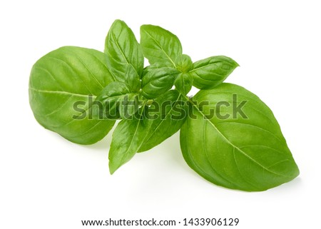 Fresh Green Basil Leaf, close-up, isolated on white background. Foto d'archivio ©