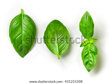 fresh green basil leaves isolated on white background, top view