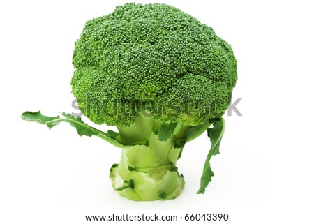 fresh green broccoli isolated in white background