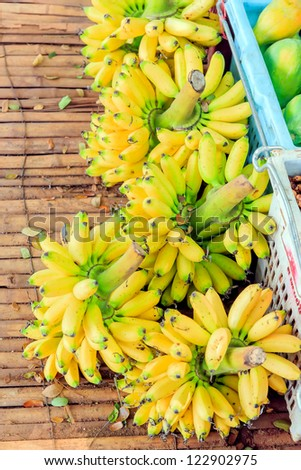 Fresh green bunch of bananas placed in rural areas.