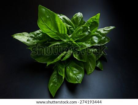 Fresh green bunch of basil on a dark background