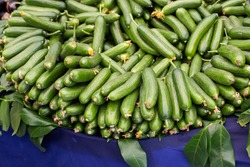Fresh green bunch of cucumbers for sale in local market.