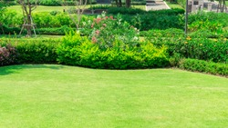 Fresh green burmuda grass smooth lawn as a carpet with curve form of bush, trees on the background, good maintenance lanscapes in a garden under morning sunlight