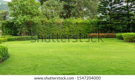 Fresh green burmuda grass smooth lawn as a carpet with curve form of bush, trees on the background, good maintenance landscapes in a garden under cloudy sky and morning sunlight Stock foto ©