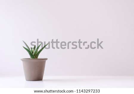 Fresh green cactus in terracotta pots on a beautiful white background. #1143297233