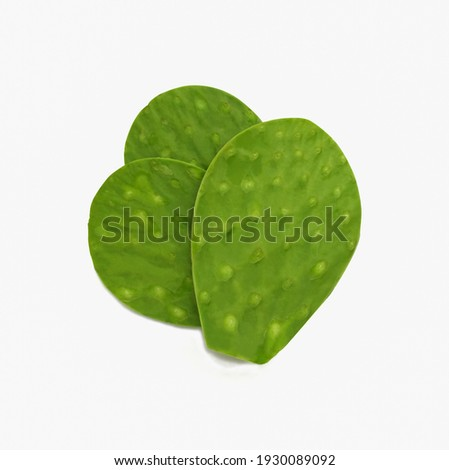 fresh green cactus leaf nopales on white background (Opuntia ficus-indica)