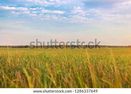 Fresh green field and blue sky in spring, panoramic view of meadow, landscape #1286337649