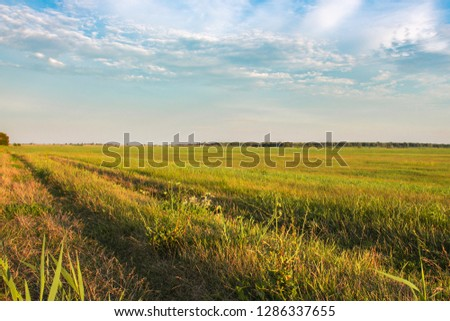 Fresh green field and blue sky in spring, panoramic view of meadow, landscape #1286337655