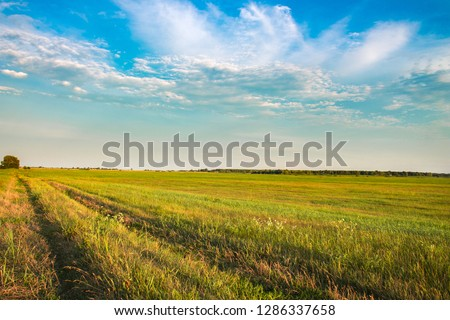 Fresh green field and blue sky in spring, panoramic view of meadow, landscape #1286337658