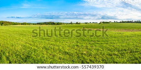 Fresh green field and blue sky in spring, panoramic view of meadow, landscape