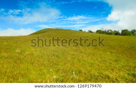 fresh green field on top of the mountain at Monjong, Chiang Mai, Thailand #1269179470