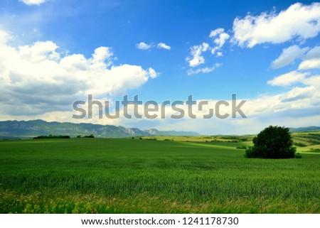 Fresh green field under blue sky. Green meadow, mountain in background. Spring fresh landscape. #1241178730