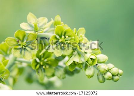fresh green flower