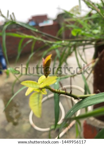 Fresh green flower wer stock images in HD