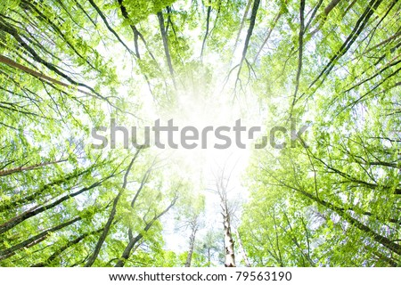 Fresh green forest and beam of light