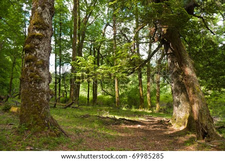 Fresh green forest with sunbeam