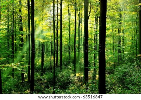 Fresh green forest with sunbeams