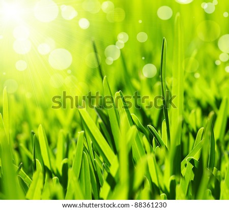 Fresh green grass abstract background, bright field with sunny bokeh, beautiful nature at spring