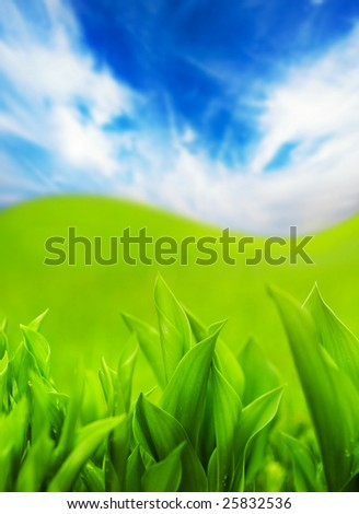 Fresh green grass and blue cloudy sky