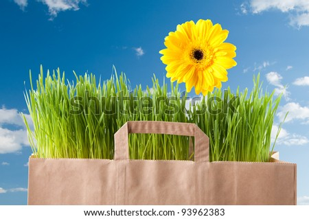 Fresh green grass and bright yellow Gerbera in a paper shopping bag, blue sky background