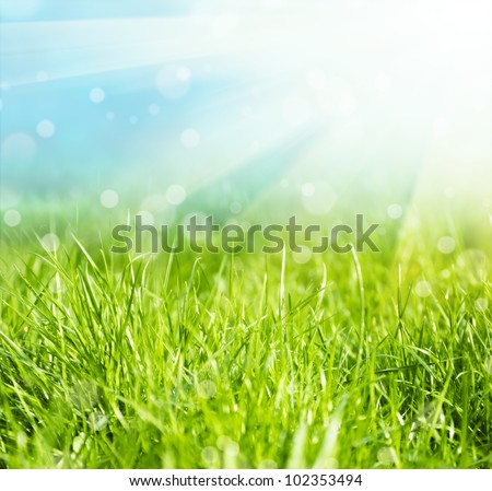 Fresh green grass and sun sky natural background