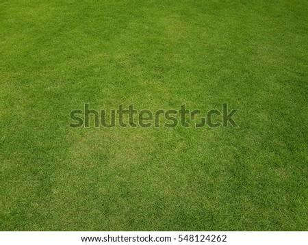 Fresh green grass field texture background - Shutterstock ID 548124262